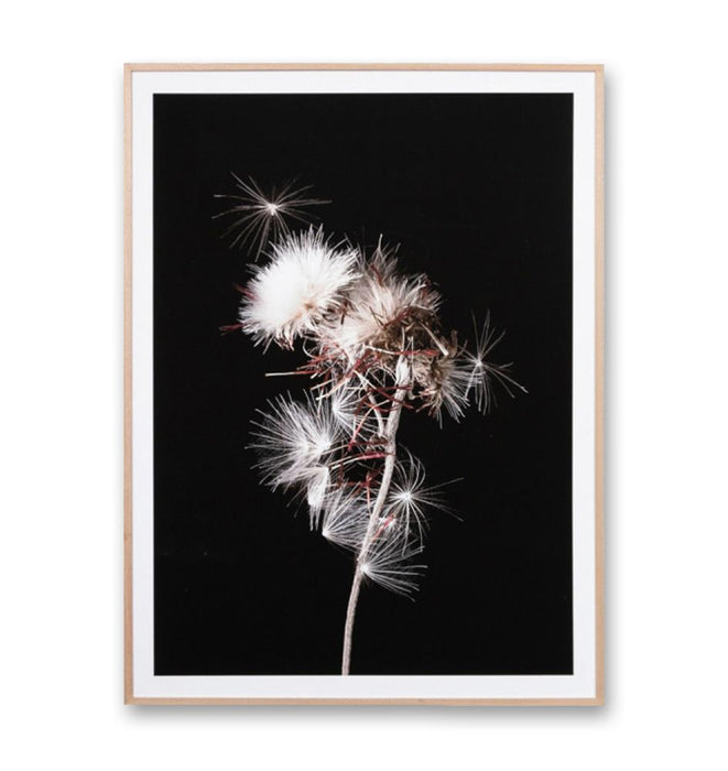 Thistle Portrait 1 Small Wall Art Print