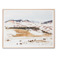 Buffalo Mountain Wall Art Print