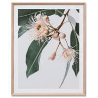 Eucalyptus Flower 2 Wall Art Print