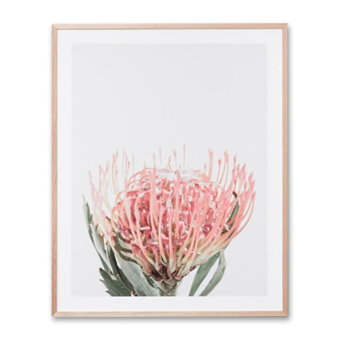 Protea Bloom Blush Wall Art Print