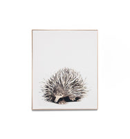 Short Beaked Echidna Framed Canvas Wall Art Print