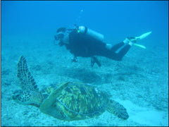 Diving with turtles in Oahu, Hawaii