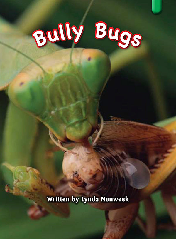 Key Links Green Book 14, Level 13: Bully Bugs