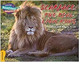 Cambridge RA Gold Band: Scarface: The Real Lion King (L21-22)