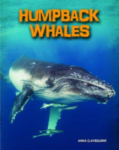 Humpback Whales - Living in the Wild: Sea Mammals