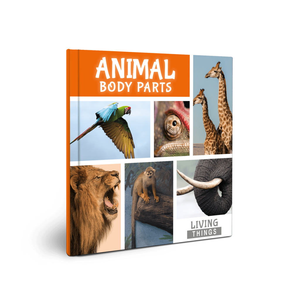 Living Things: Animal Body Parts