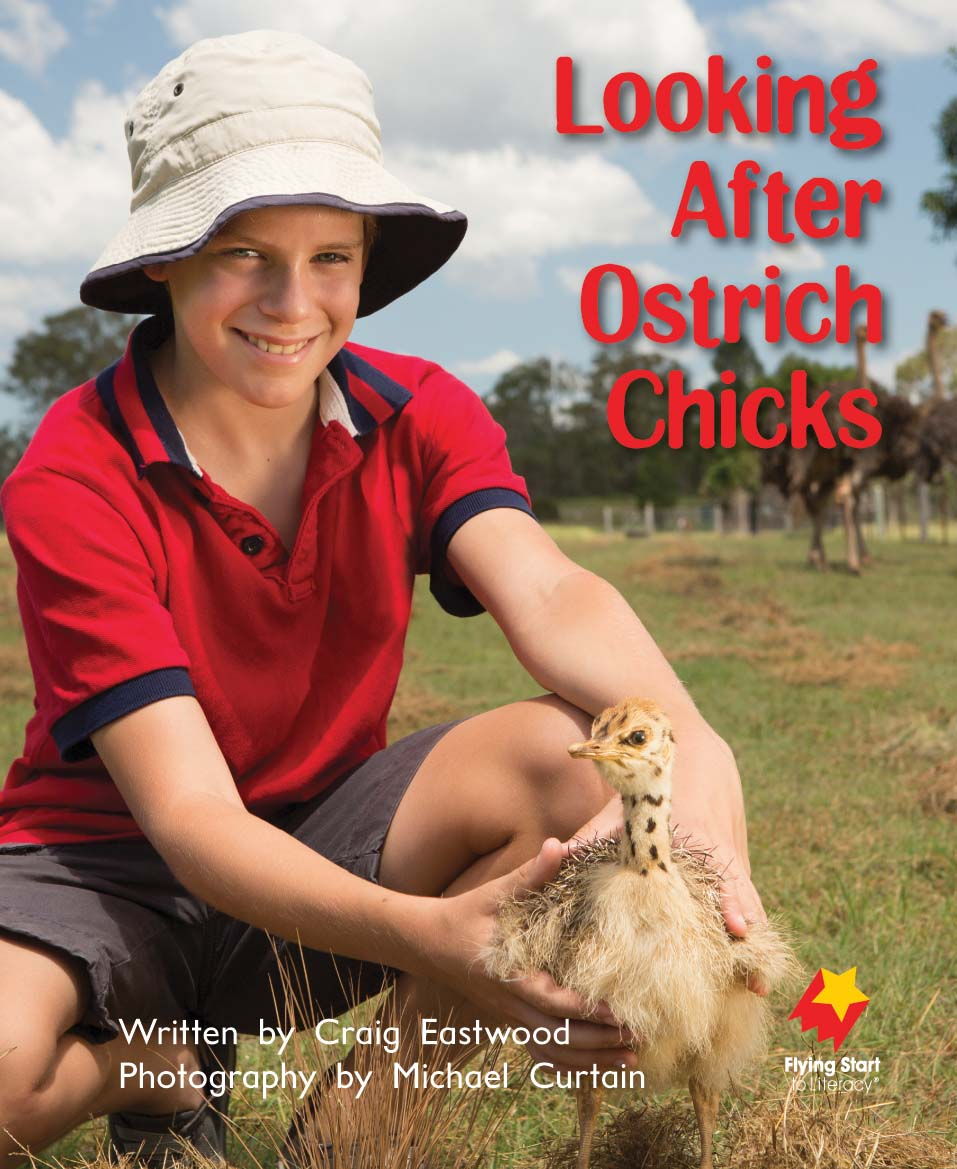 FS Level 10: Looking After Ostrich Chicks