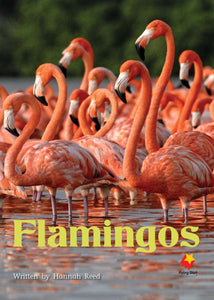 FS Level 16: Flamingos