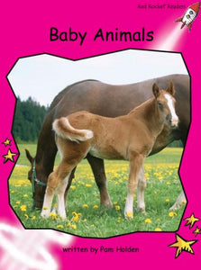 Red Rocket Emergent Non Fiction B (Level 1): Baby Animals