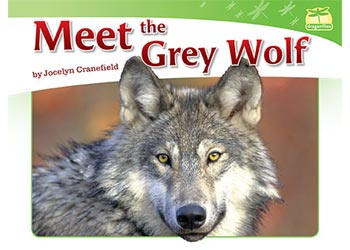 Dragonflies(L12-14): Meet the Grey Wolf