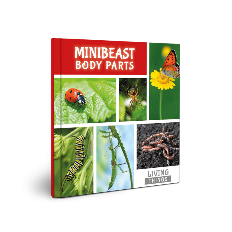 Living Things: Minibeast Body Parts
