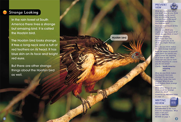 Key Links Turquoise, Level 17-18: The Hoatzin Bird
