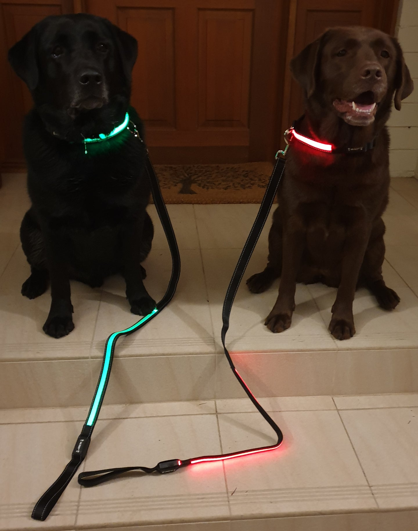 Illuminated Pets - Collars and Leads