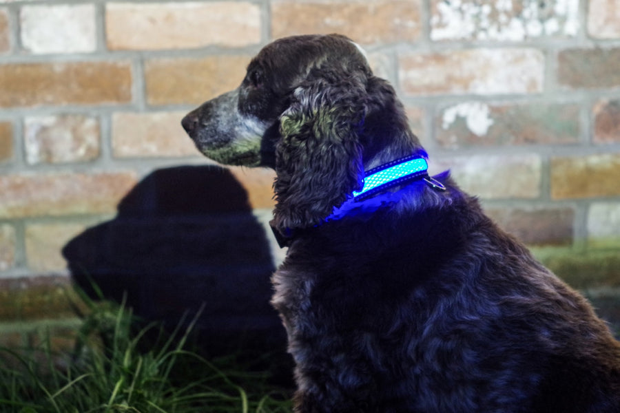 BLUE LIGHT UP PET COLLAR