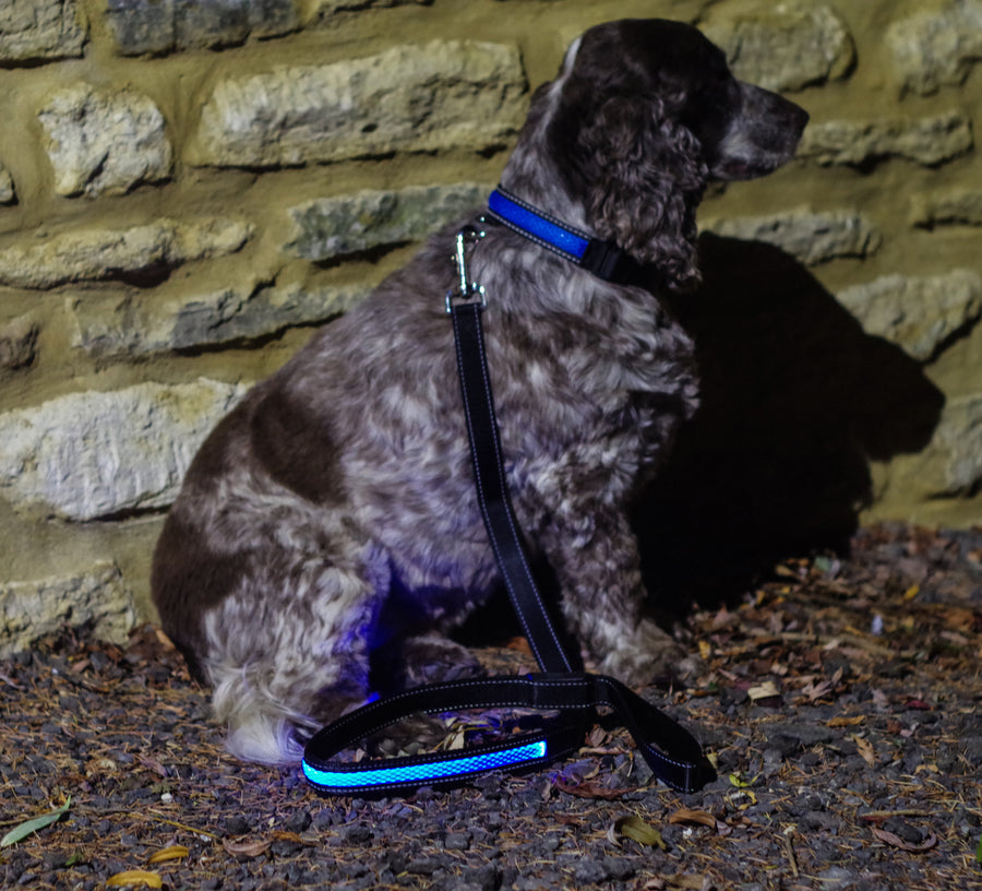 BLUE LIGHT UP DOG LEAD