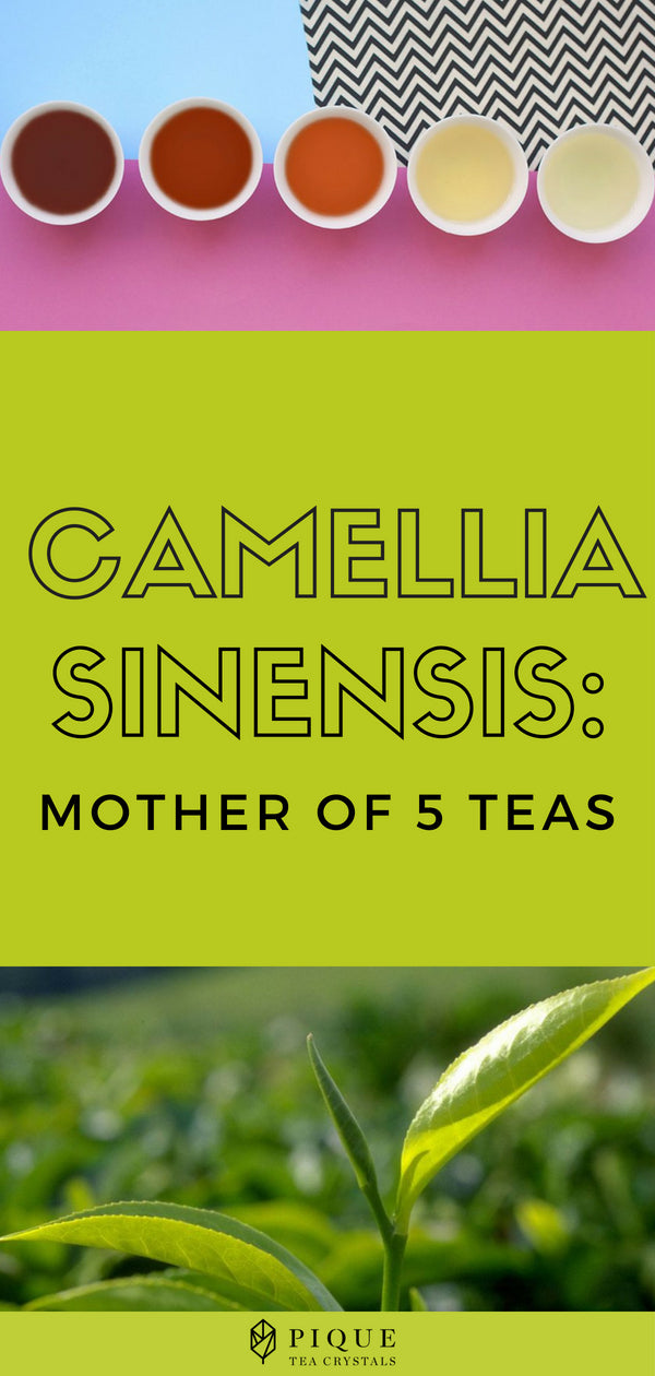 Camellia Sinensis: Mother of 5 Teas