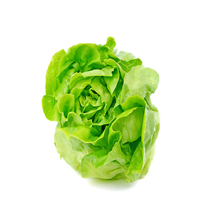 Butter Head Lettuce