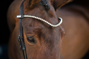 PSOS Browband, Big Bucks