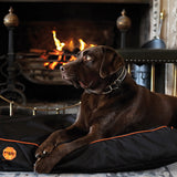 Rambo Ionic Dog Bed