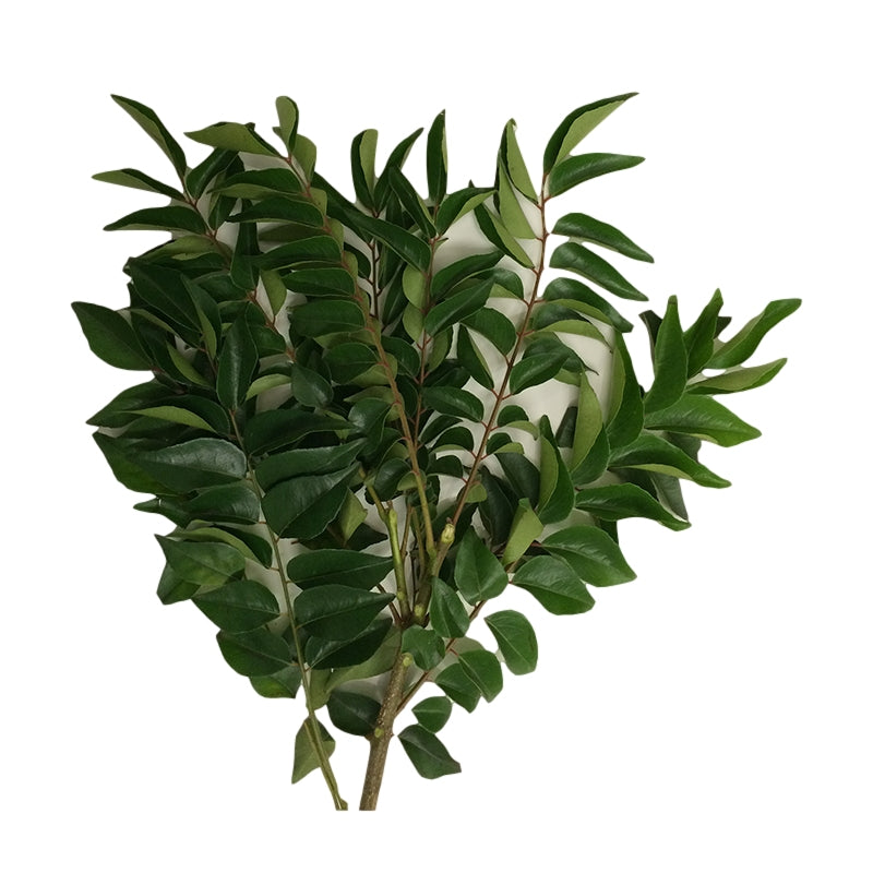 Fresh Curry leaves - 50g