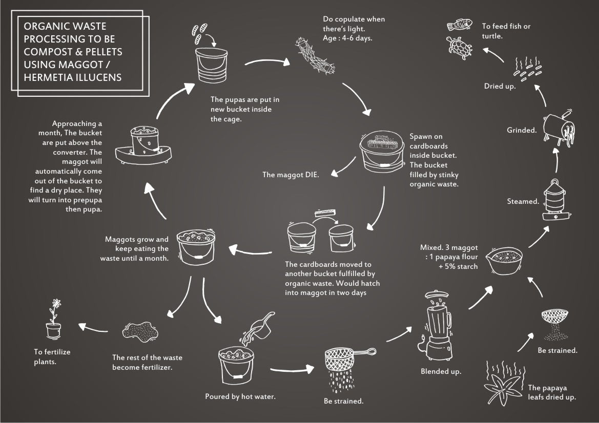 """The infographic of  organic waste processing using maggot."""