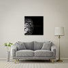 Crown Of Thorns - Lion Large Format - Metal Print 80cm x 80cm
