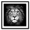 Lion of Judah Large Format - Artist Print with Frame (Print Size:80cm x 80cm; Framed Size 94cm x 94cm)