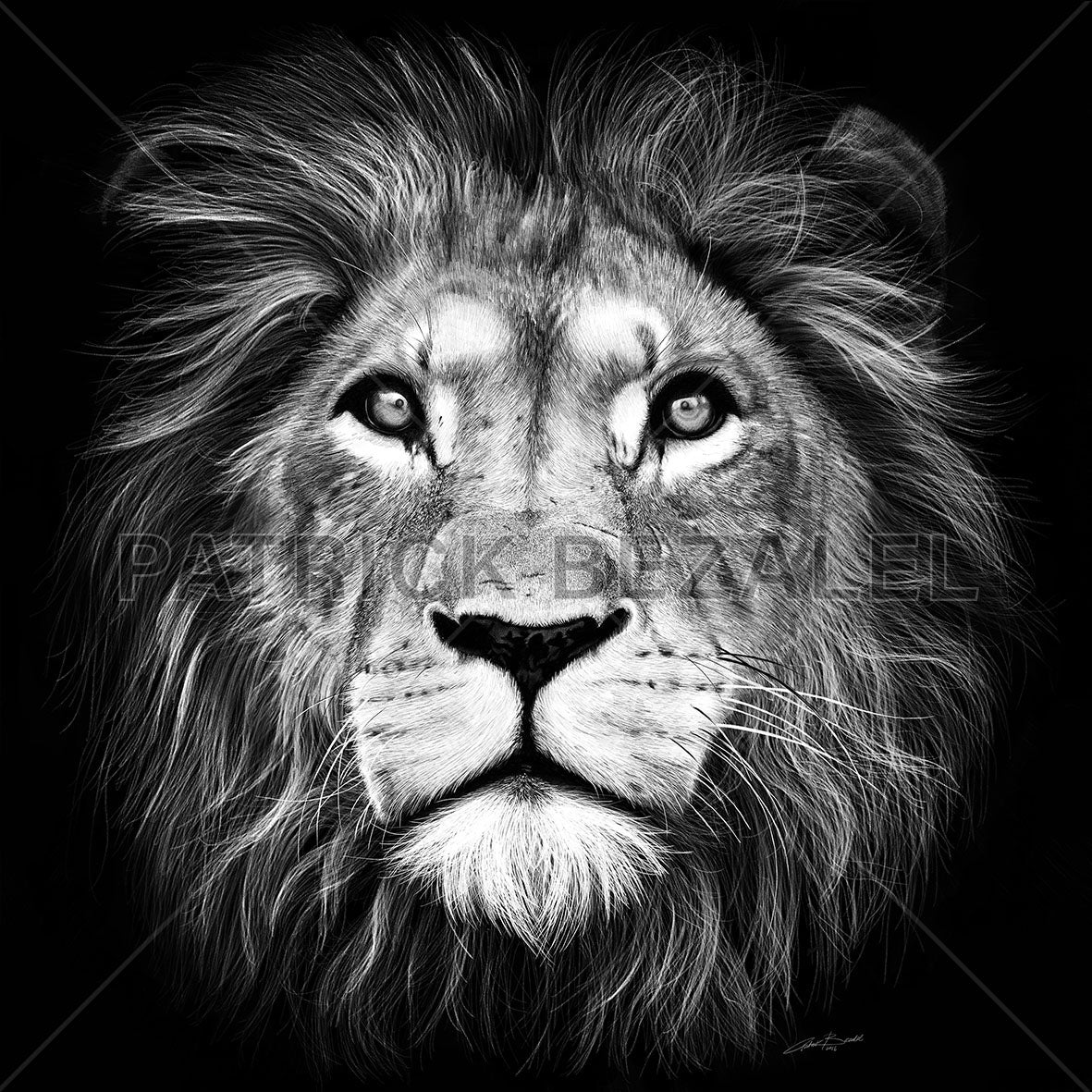 Pictures of judah lion