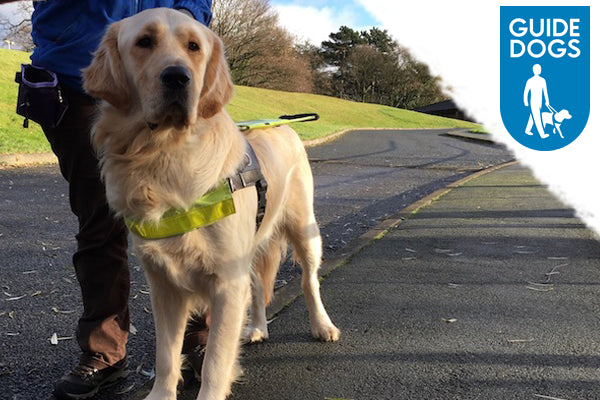 Help Train Guide Dog Puppies: Away Day