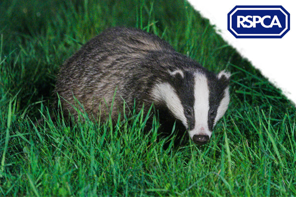 Wildlife Photography Weekend with the RSPCA near Hastings