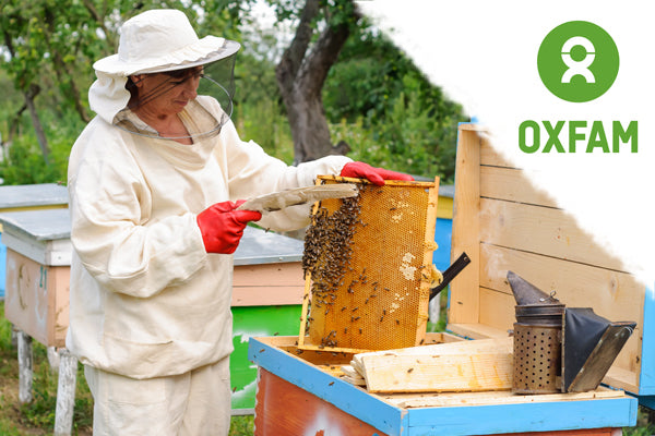 Beginners Guide to Beekeeping