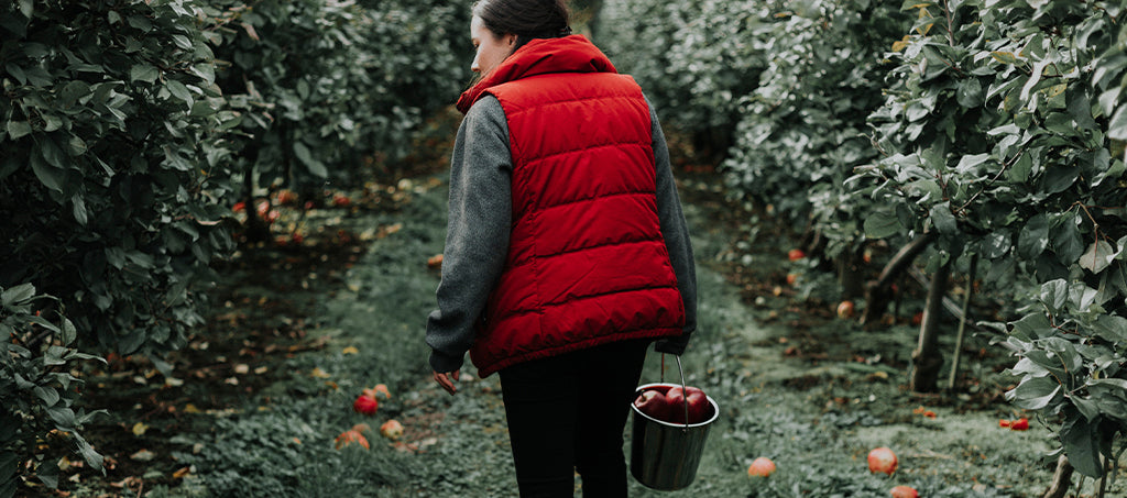 woman picks and collects apples