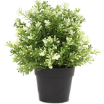 Small Potted Artificial White Jade Plant Recyclex Uv Resistant Technology 20Cm