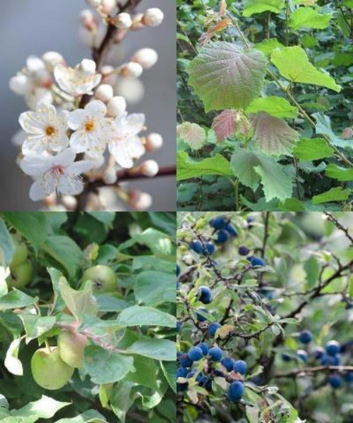 Fruit & Nut Tree Mix - Trees to Plant
