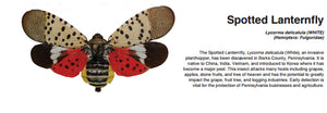 Are You Ready for Lanternfly Season