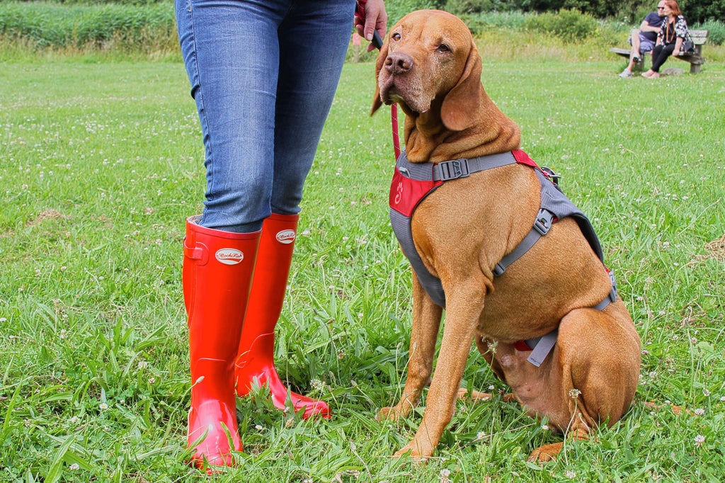 Rockfish Wellies Dog walking in style, BUY NOW from £44.99