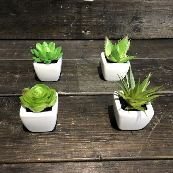 Mini plantes grasse artificielles