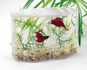 Lee's Betta Hex Dual Mini Tank Kit
