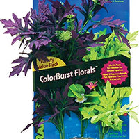 Blue Ribbon Plant - Multipack Amazon Broad Leaf Flowering Cluster