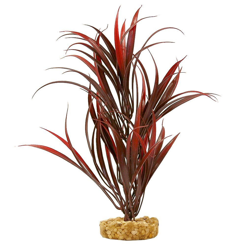 Blue Ribbon Gravel Base Plant - Sword Plant Red