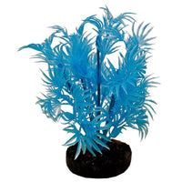 Blue Ribbon Colorburst Plant Dragon Leaf