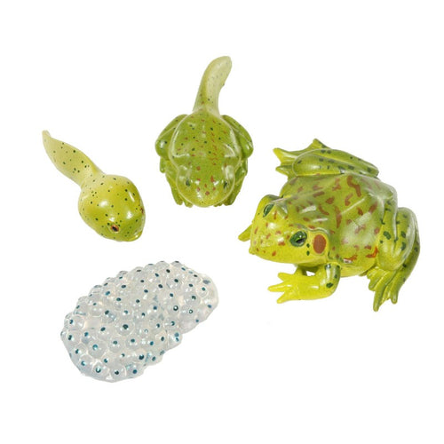 Insectlore Frog Life Stages Set