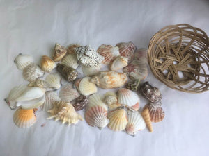 Shell Basket 15cm diameter