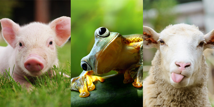 Teaching Similarities and Differences: More than Two Animals—with FREE Download!