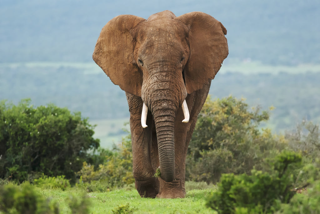 Hameray's Critter Corner - Elephant Lesson Plan!