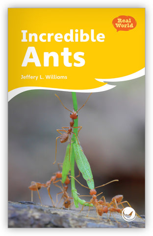 Incredible Ants Big Book