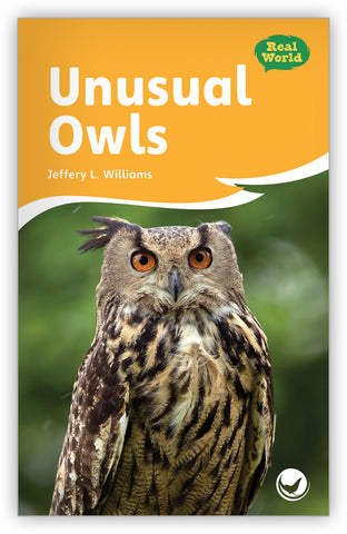 Unusual Owls Big Book