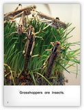 All About Grasshoppers Big Book from Kaleidoscope Collection