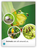 Animals Everywhere Big Book from My World