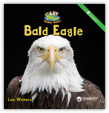 Bald Eagle from Zoozoo Animal World